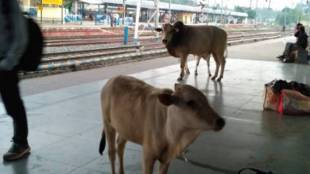 jasidih railway station