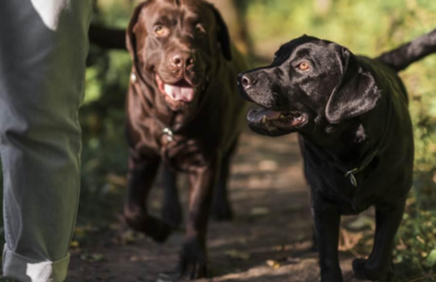 Dogs, Girl, Children, Piece, Meat, Attack, Dogs, Garden, Liverpool, Britain, Crime News, International News, Latest News, Hindi News