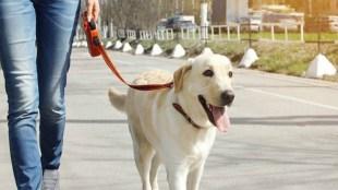 social life, pet dogs