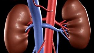 kidney, kidney problems, kidney diseases, renal diseases, kidney disease symptoms