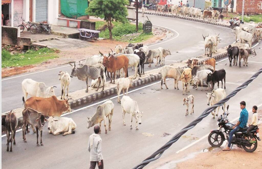 cow vigilantism, cow slaughter law, Allahabad High Court,