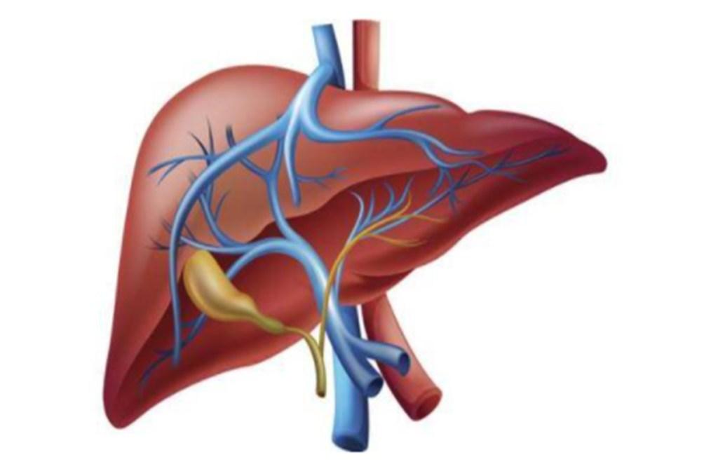 liver disease, healthy liver, treatment of liver disease