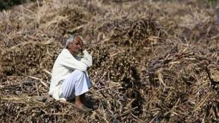 Farm Laws, Farmers, Punjab, BJP, INC