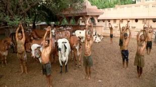 Gujarat, Coronavirus, Immunity