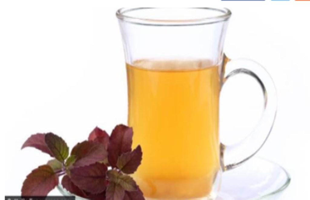 tulsi, Tulsi Water Benefits, Lifestyle News