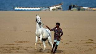 Ajmer, Rajasthan, Horse