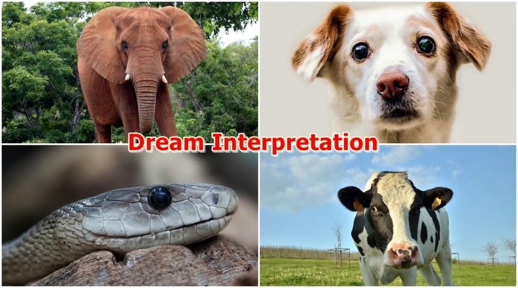 dream interrelation, dream astrology, sapno ka maltlab, animals dream, dream meaning, dreams,