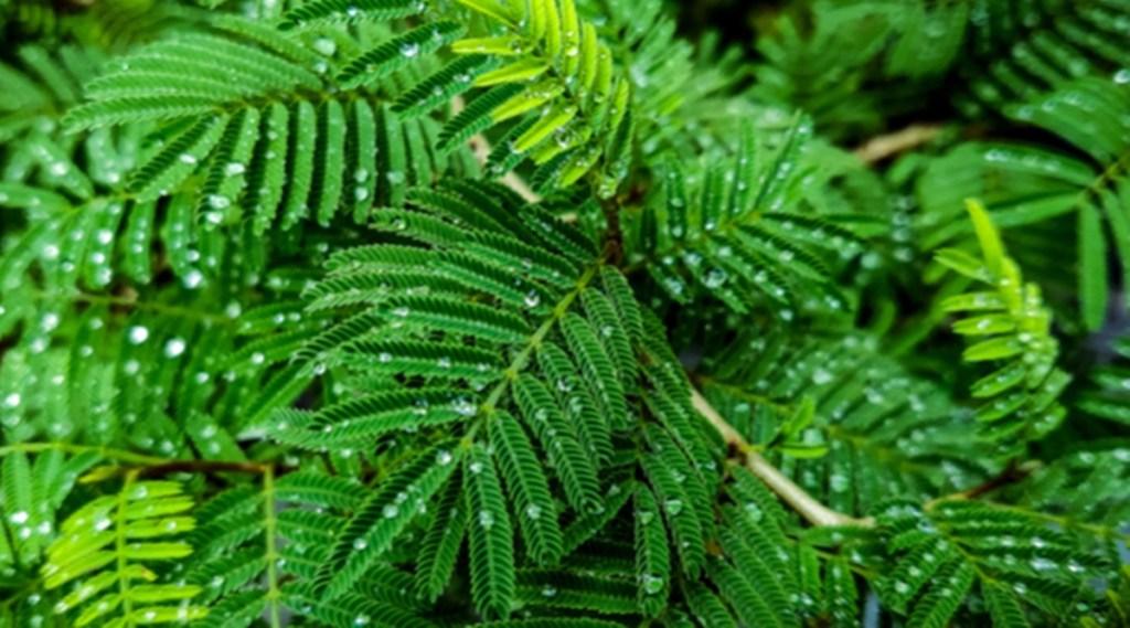 vastu tips for home, vastu tips for plant, vastu shastra, vastu upay, vastu home decoration, vastu tips for planting tree, vastu tips foe money,