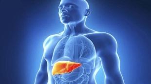 fatty liver,