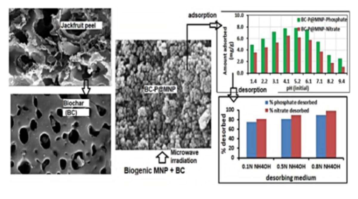 Nanocomposites made from jackfruit peel can reduce water pollution