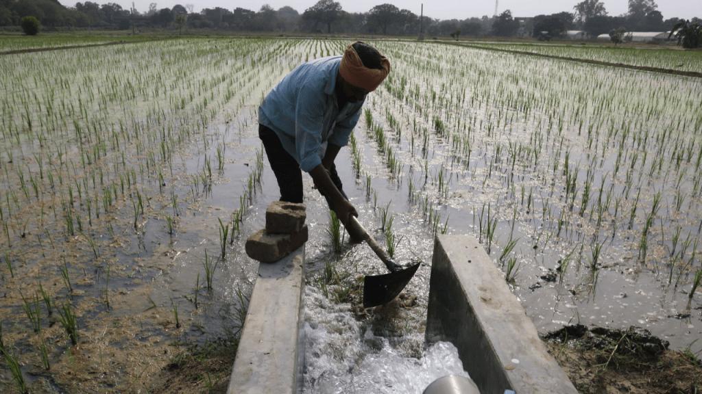 Farmers, PM Kisan, Utility News