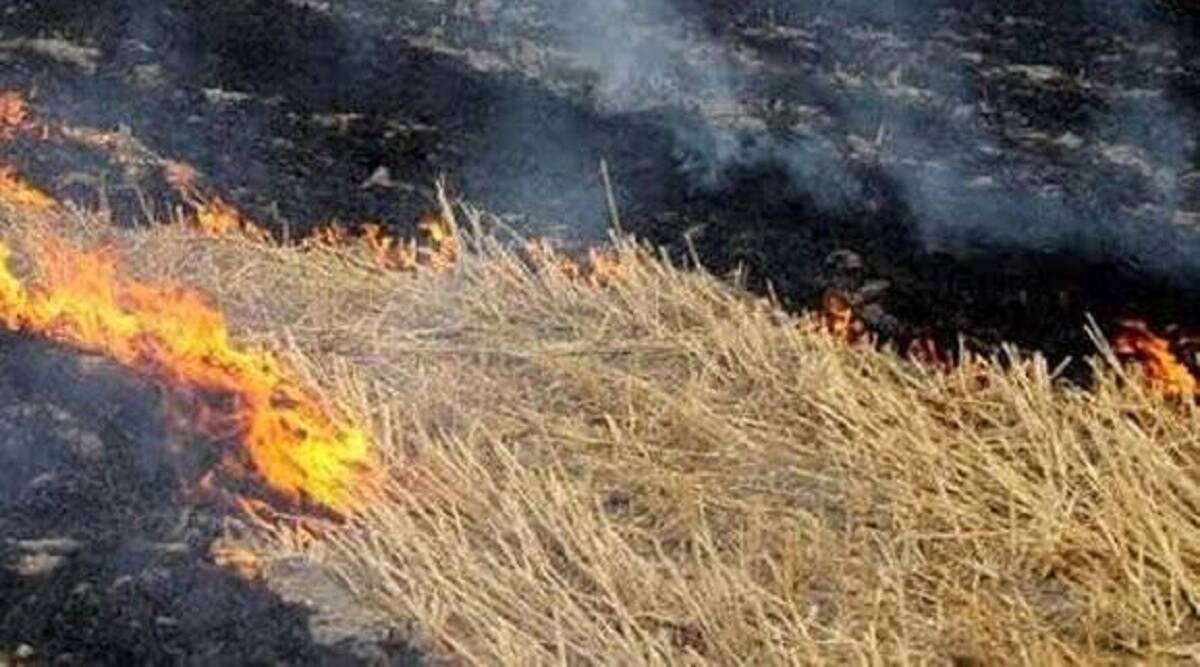 India tops in burning crop residues, claims in report – 13 percent of smoke emanated from our fields in the last five years