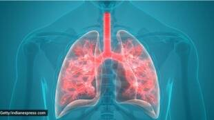 lungs, lung infection, lungs care
